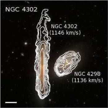 SDSS + HI contours